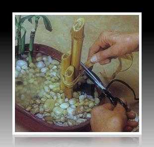 Dùng dây ruy băng buộc 3 ống tre giúp thân tre được vững chắc hơn trong bình gốm